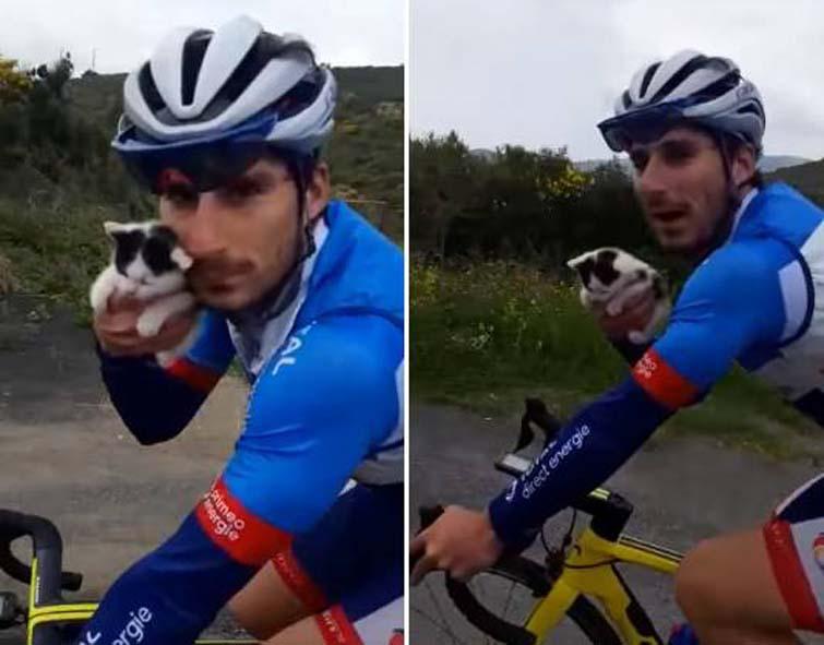 Gattino con un ciclista
