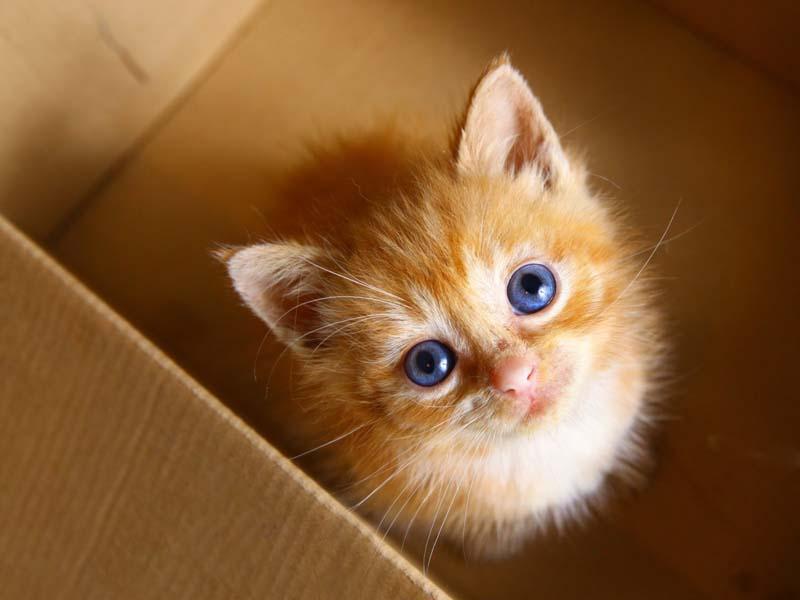Gattino dentro ad una scatola