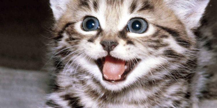 Gattino felice