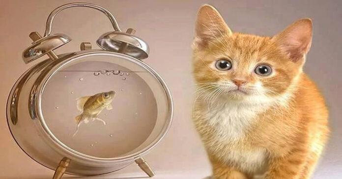 Gattino vicino ad un orologio