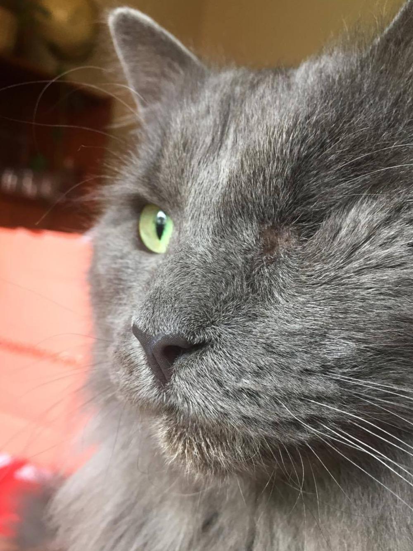 Gatto a cui manca un occhio