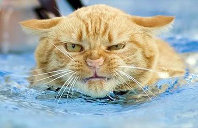 Gatto arrabbiato in acqua