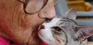 Gatto baciato da un'anziana donna