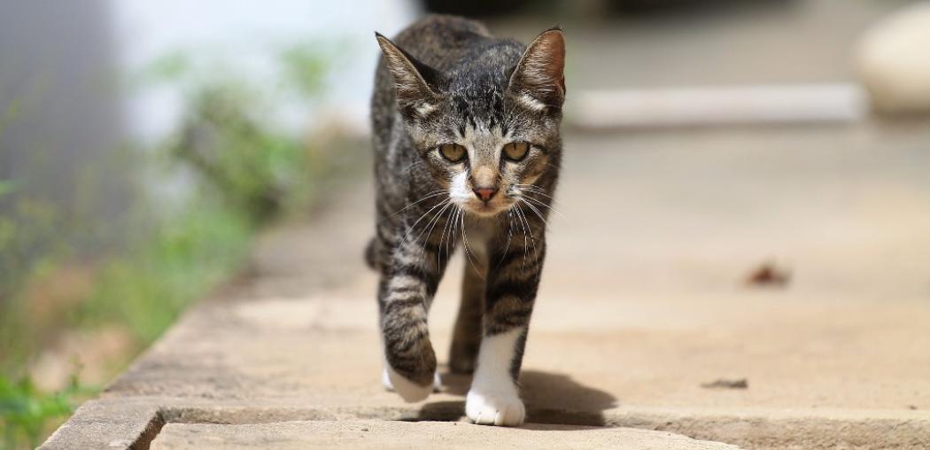 Gatto che cammina all'aperto