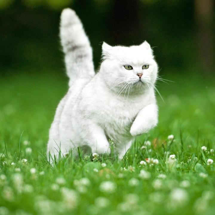 Gatto che corre in un prato