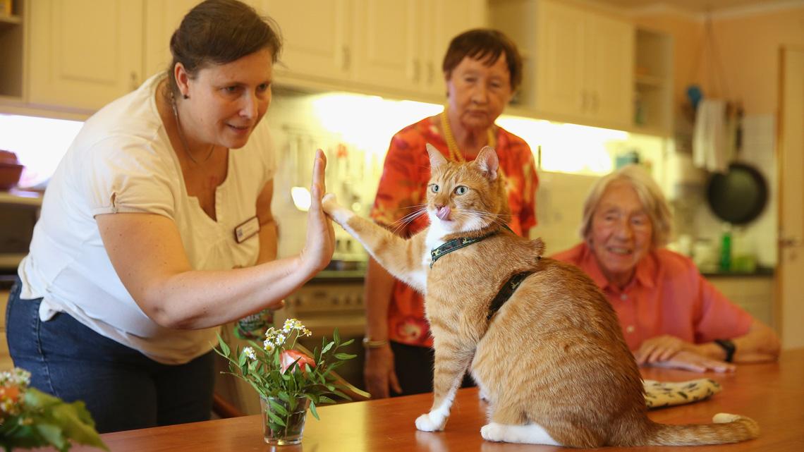 Gatto che dà il cinque ad una donna