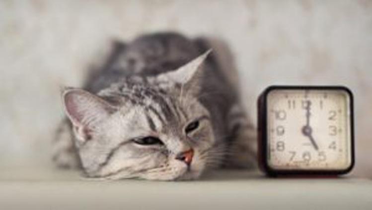 Gatto che dorme vicino ad una sveglia