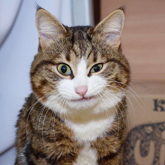 Gatto che fa una smorfia