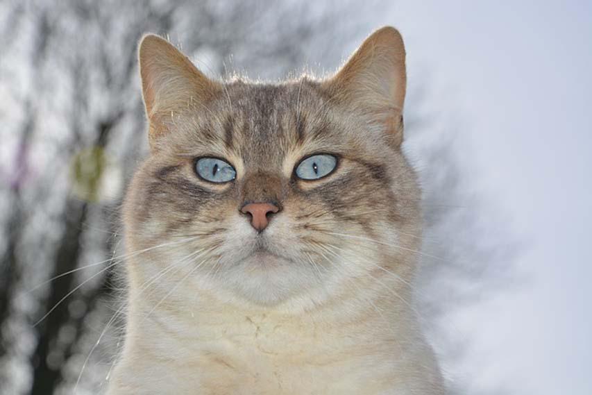 Gatto che fissa