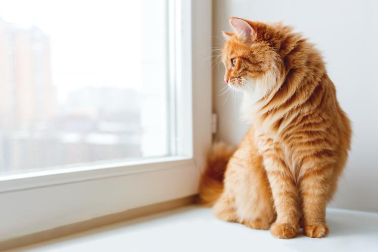 Gatto che guarda fuori ad una finestra