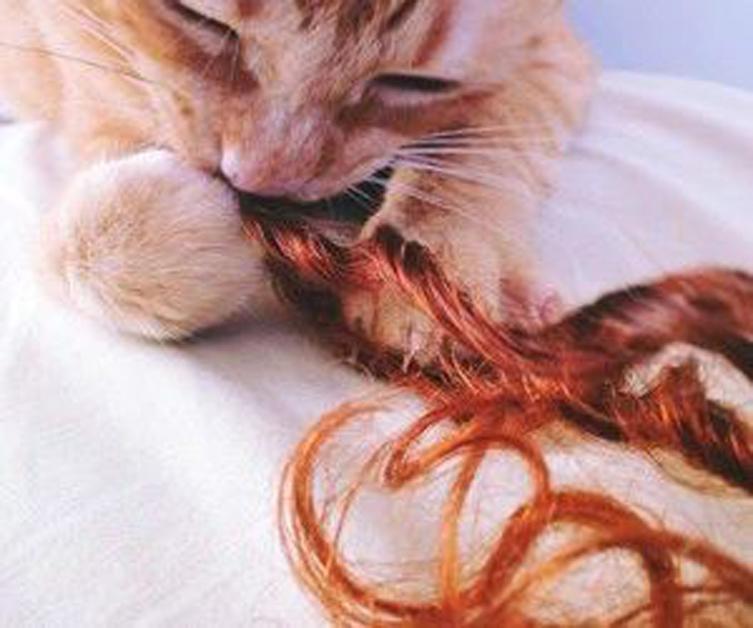 Gatto che morde i capelli
