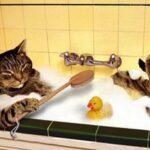 Gatto che si fa il bagno