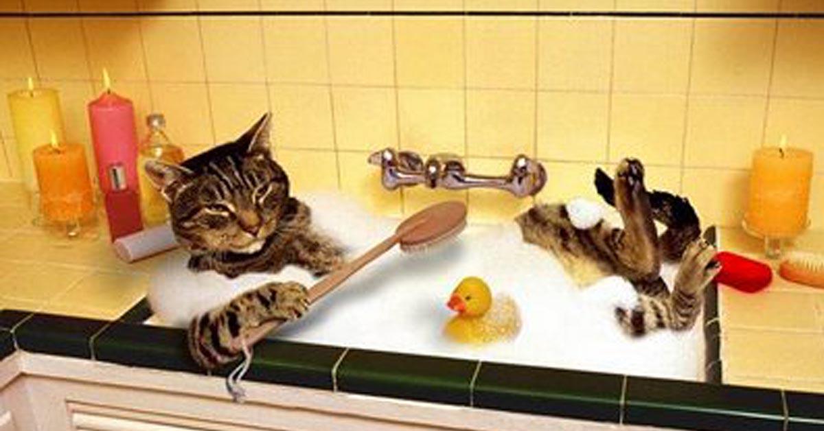 Lavare il gatto s o no tutto quello che c 39 da sapere for Ibiza a maggio si fa il bagno