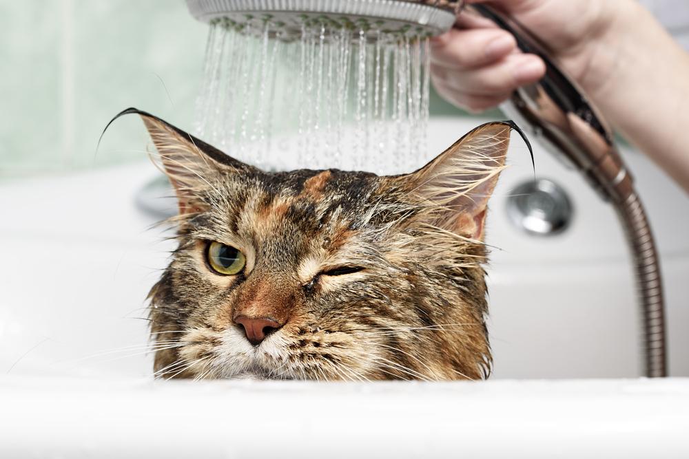 Gatto che si fa lavare
