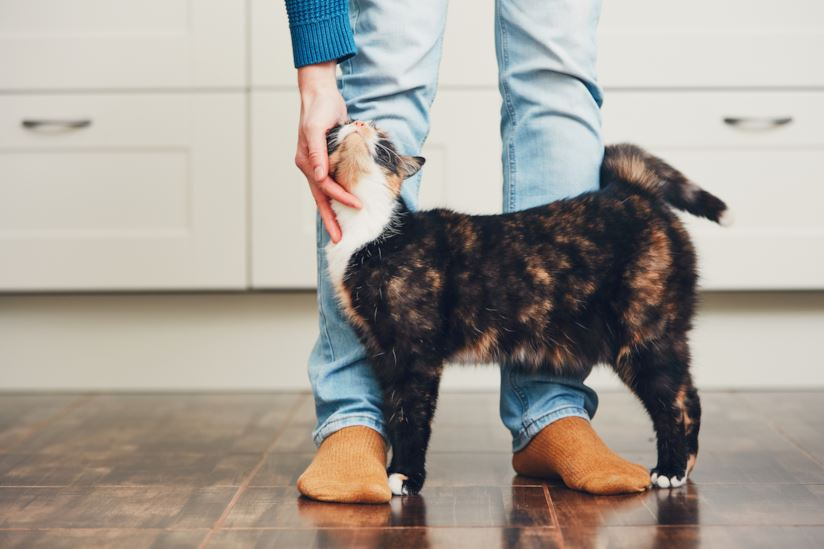 Gatto che si struscia sulle gambe