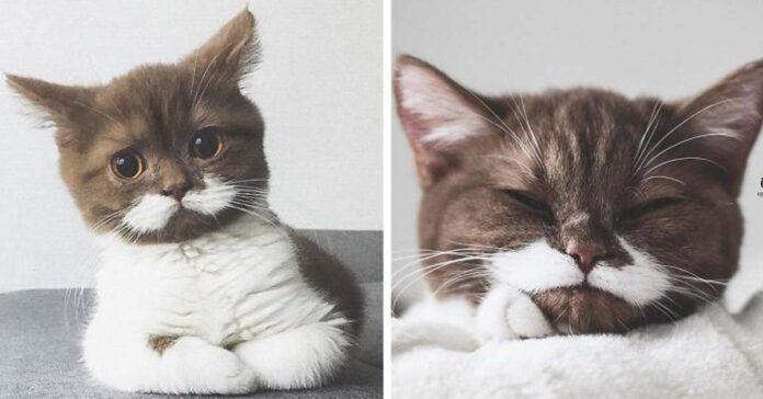 Gatto con i baffi