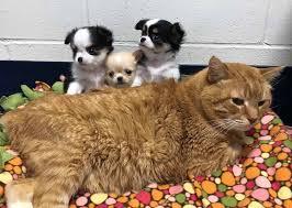 Gatto con tre cuccioli di cane