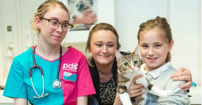 Gatto dal veterinario con la famiglia