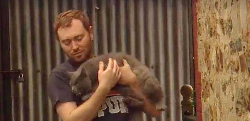 Gatto in braccio ad un uomo