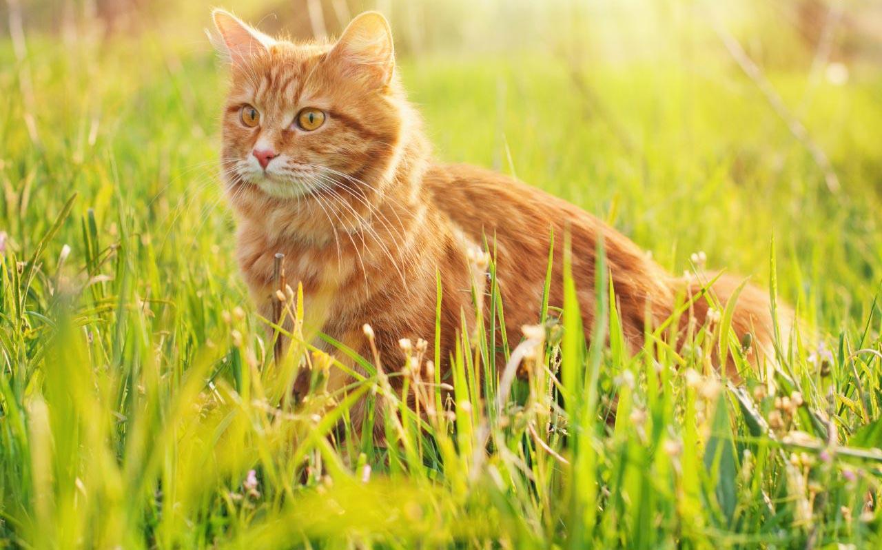Gatto in mezzo all'erba