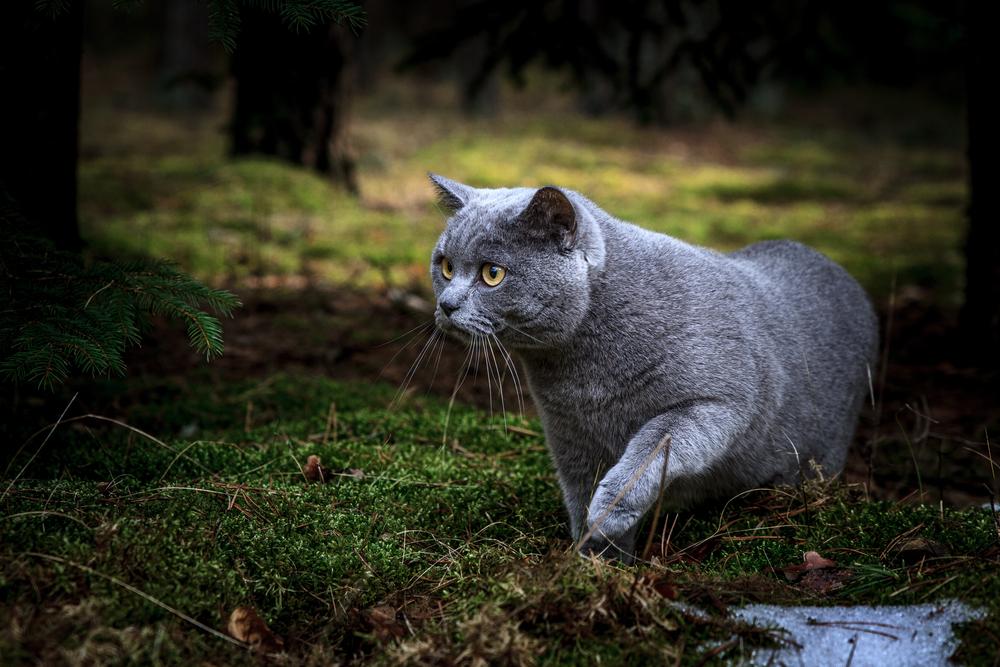 Gatto in un bosco