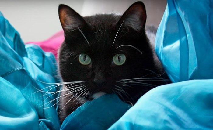Gatto nero che fissa