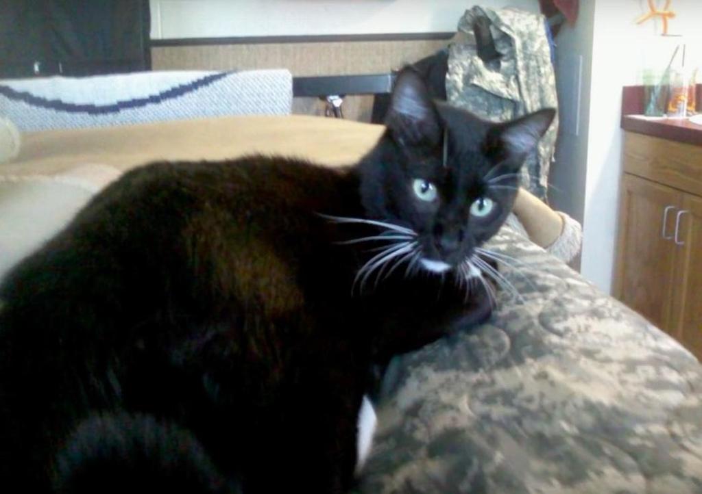 Gatto nero su un letto