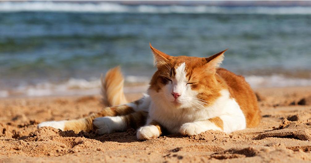 Gatto sdraiato in spiaggia