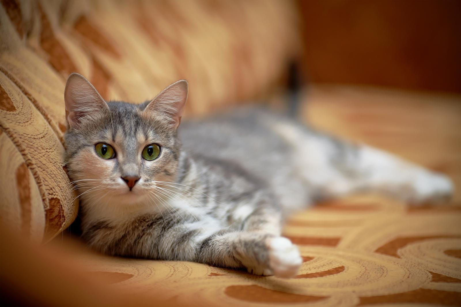 Gatto sdraiato su un divano