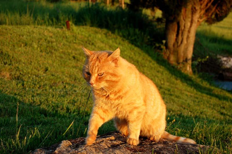 Gatto seduto su una roccia