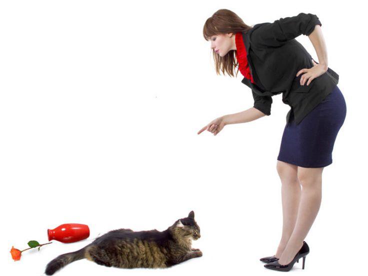 Gatto sgridato da una donna