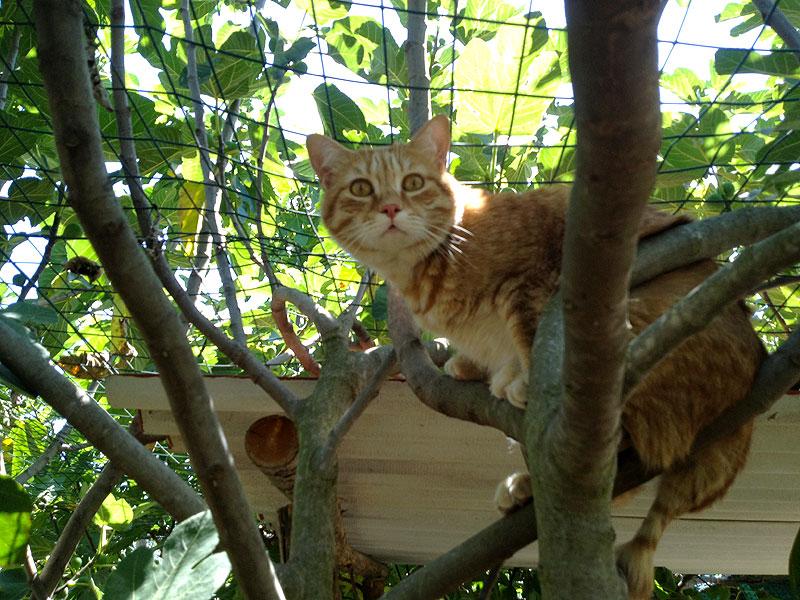 Gatto sopra ad un albero