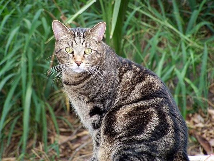 Gatto tigrato seduto all'aperto