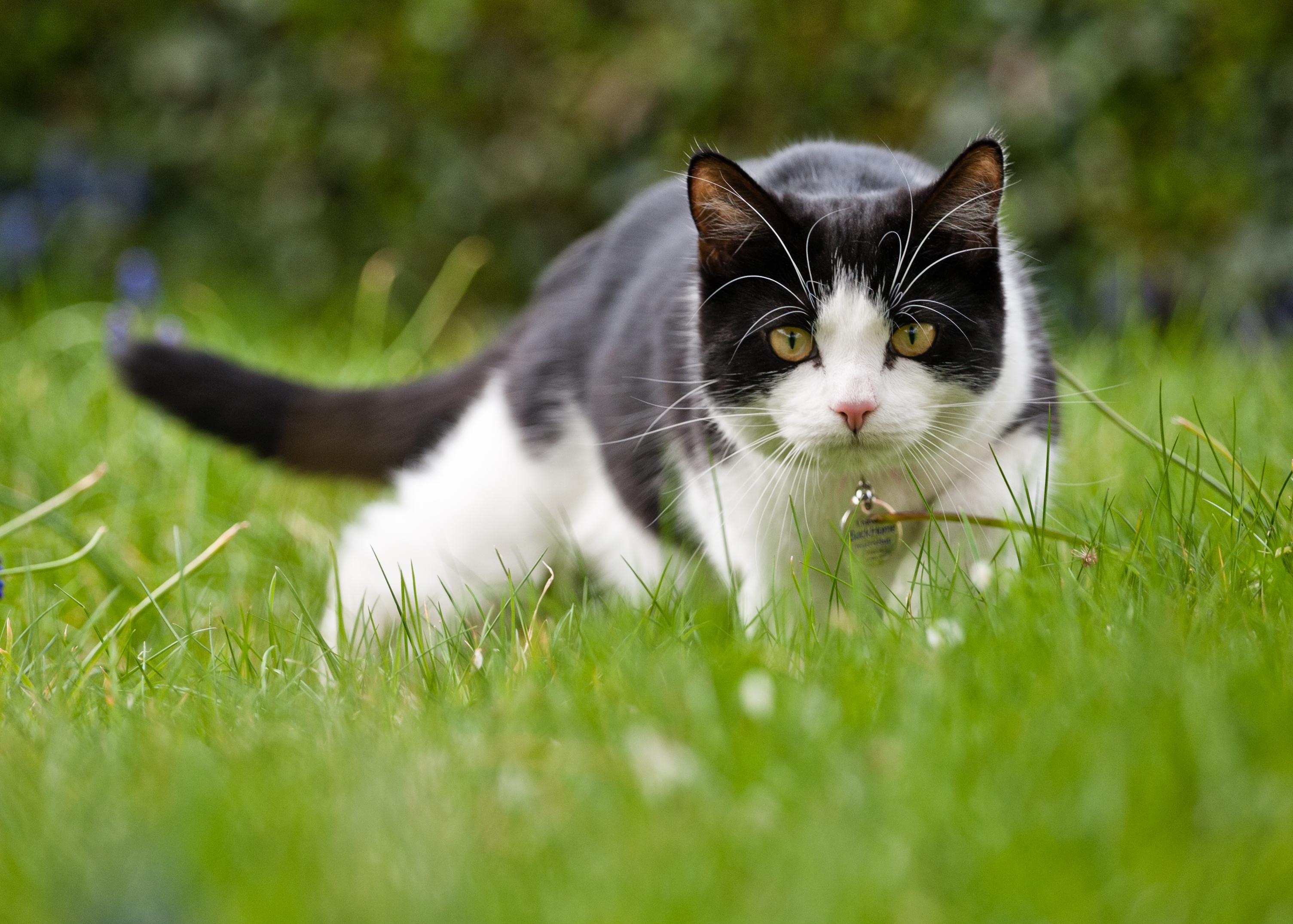 Gatto tra l'erba