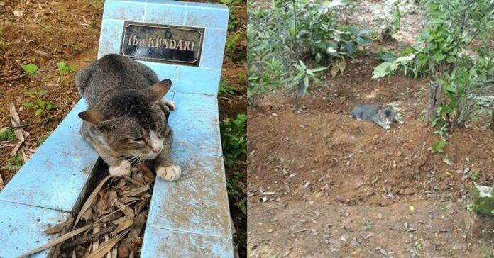 gatto-su-tomba