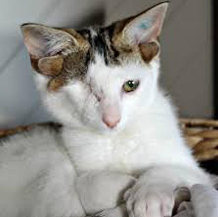 La storia del gatto Frankie