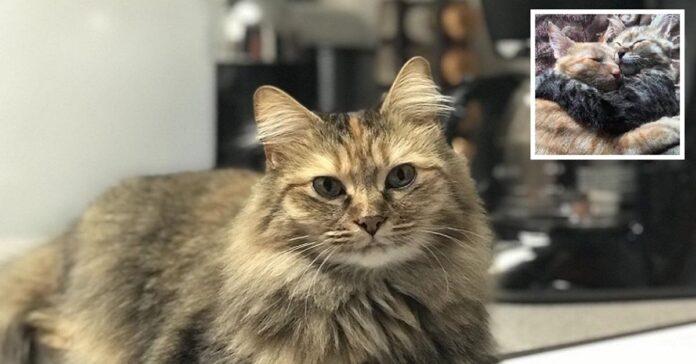 La storia del gatto Luna