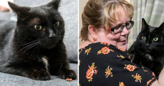 La storia del gatto Walter