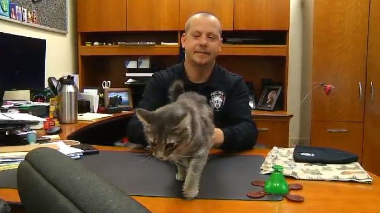 Mercy Meow la gatta poliziotta