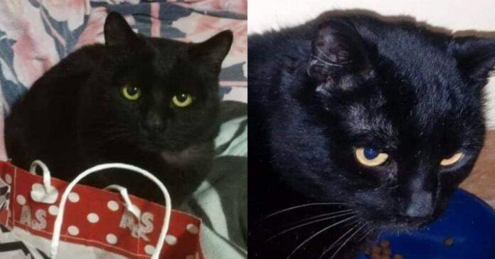 gatto-nero-su-divano-e-con-ciotola
