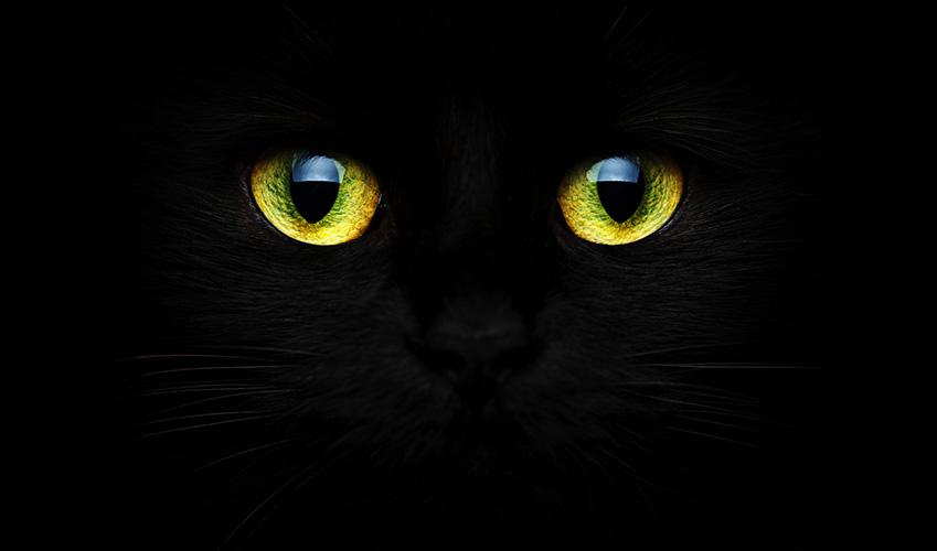 Occhi gialli di un gatto nero