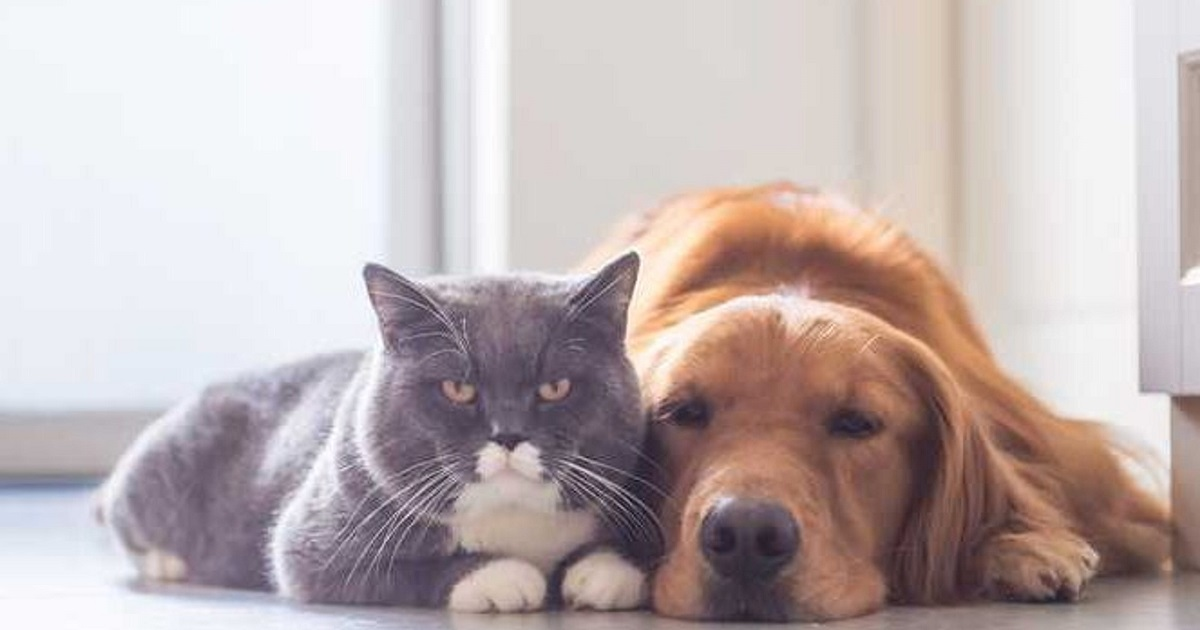 cane e gatto distesi per terra