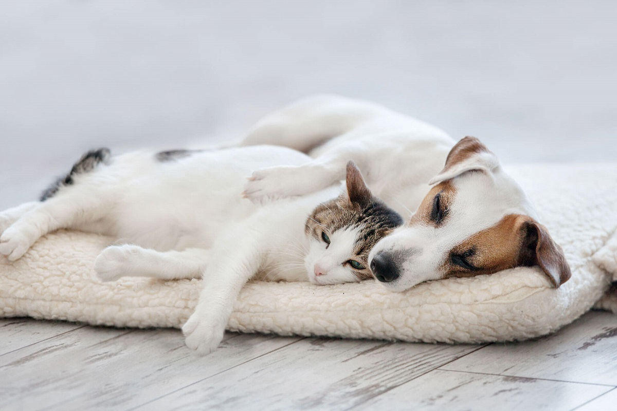 cane e gatto su cuscino bianco