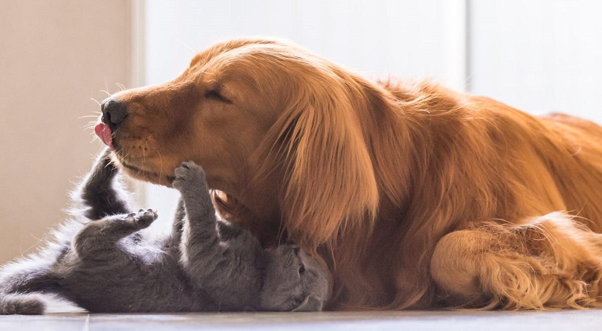 cane e gattino che giocano