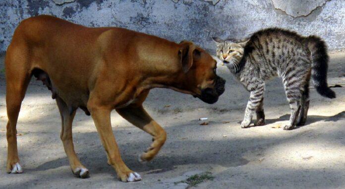 cane e gatto ostili per strada