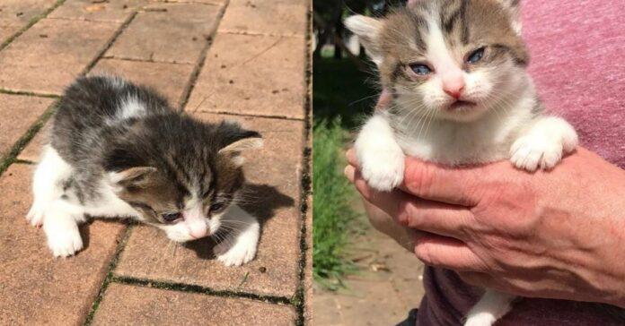 gattino-piccolo