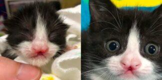 gattino-bianco-e-nero-con-labbro-leporino