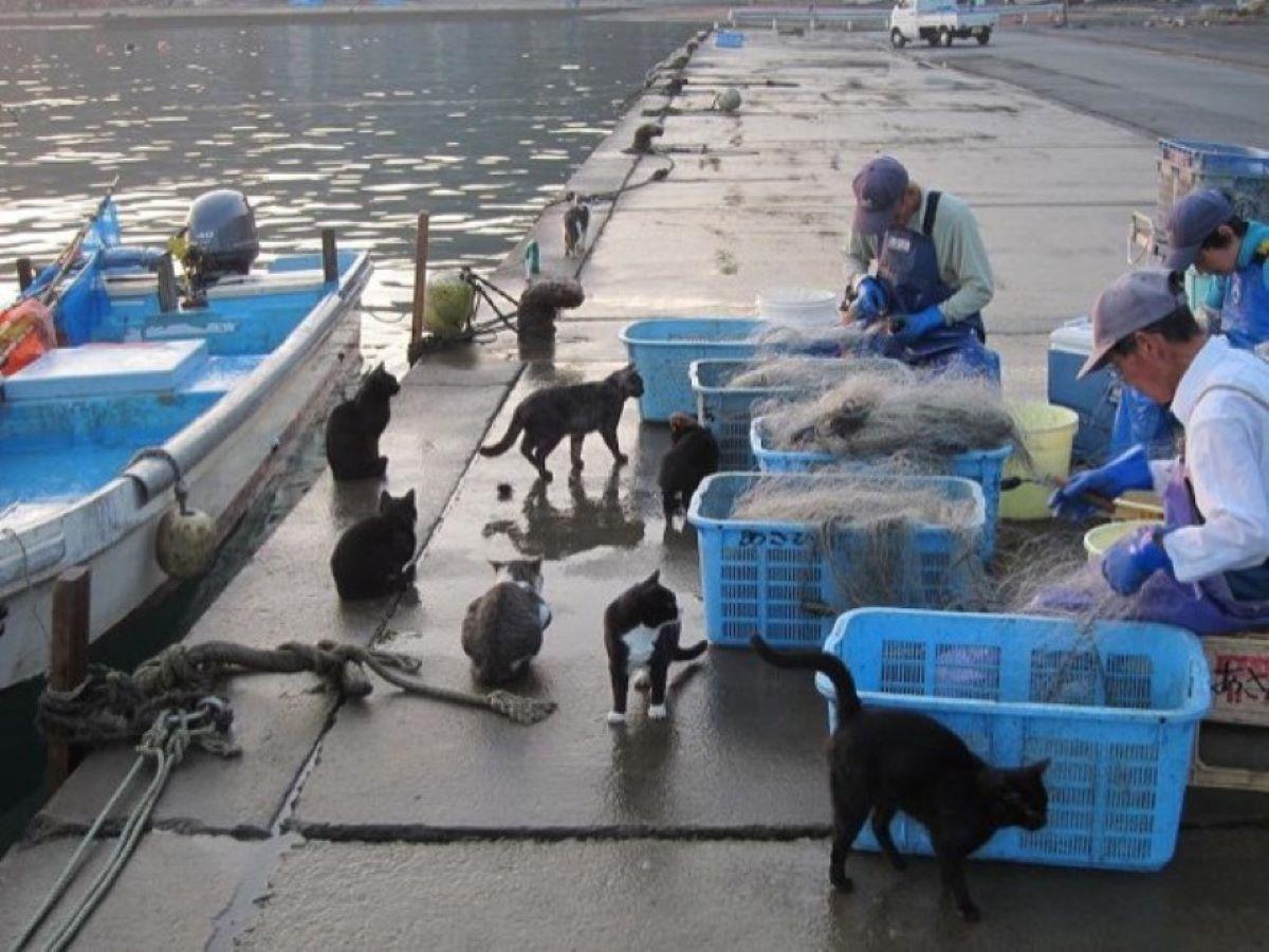 gatti-con-pescatori