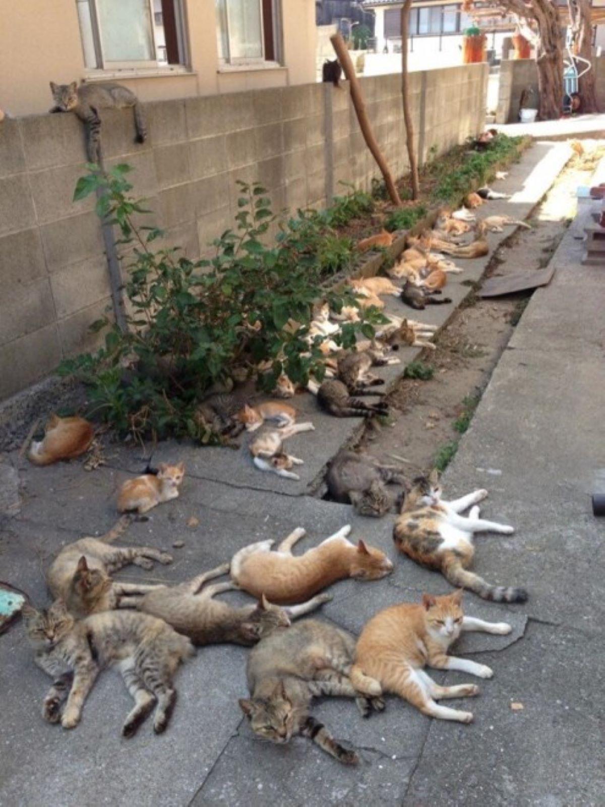 marea-di-gatti
