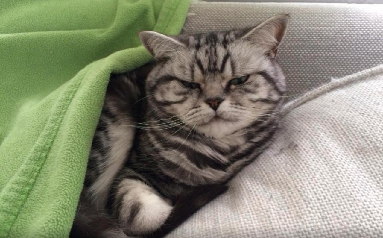 Un gatto arrabbiato